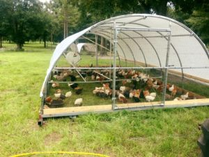 PPT056: Designing Movable Shelters for Pasture Raised Broilers and Layers with Pastured Life Farm